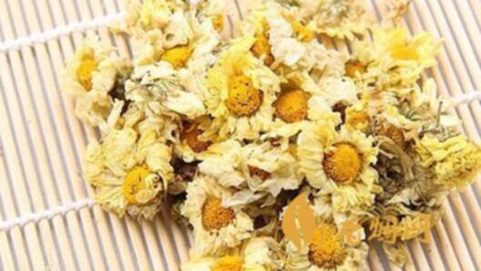杭白菊的功效与作用 杭白菊的禁忌有哪些